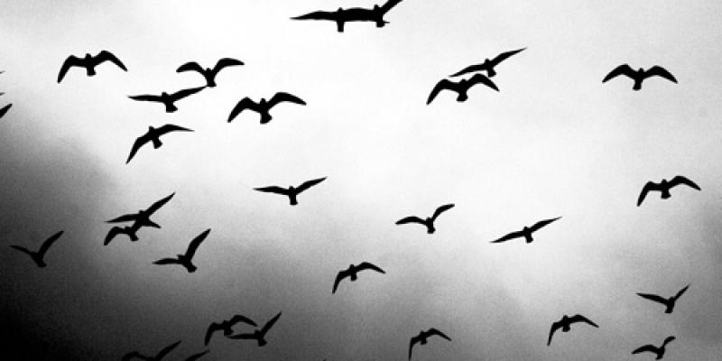 44-monochromatic-free-bird-wallpapers
